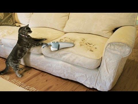 убираем шерсть с дивана