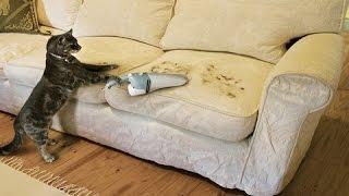 Как убрать шерсть животных с домашних предметов и мебели - полезные советы
