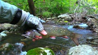 Trout Streams of Shenandoah National Park, VA