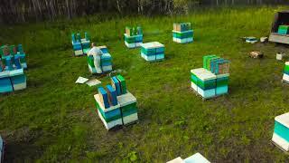 Промышленное пчеловодство в Сибири  Пасека Матюшкиных  Кемерово 2017