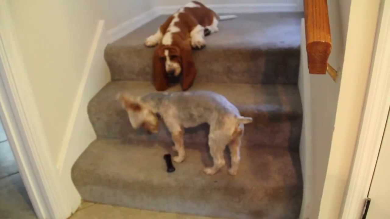 Two Dogs One Bone And Some Stairs Youtube