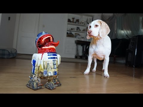 Dog vs Zombie R2D2 Prank! Funny Dogs Maymo, Potpie & Penny