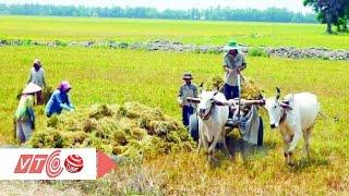 Nông nghiệp Việt Nam gặp khó khi vào TPP | VTC