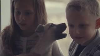 Собака - лучший друг! Берите животных в приюте!