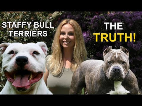 STAFFORDSHIRE BULL TERRIERS - THE TRUTH