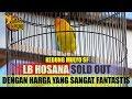 Lovebird Hosana Soldout Dengan Harga Fantastis  Mp3 - Mp4 Download