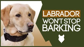 LABRADOR TRAINING TIPS! How to Stop Your Labrador From Barking!