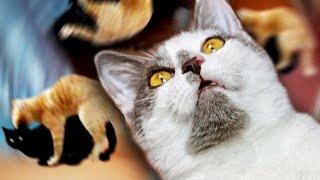ПАРОДИЯ: Мот & Лорак - СОПРАНО / МАРТОВСКИЙ КОТ