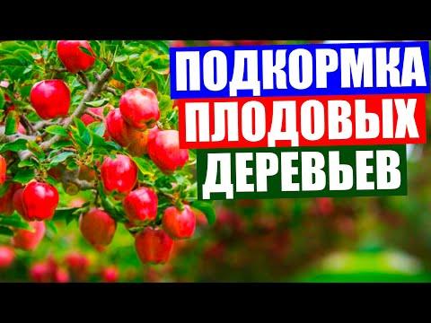 Подкормка плодовых деревьев осенью. Осенняя подкормка плодовых деревьев. Чем подкормить деревья.