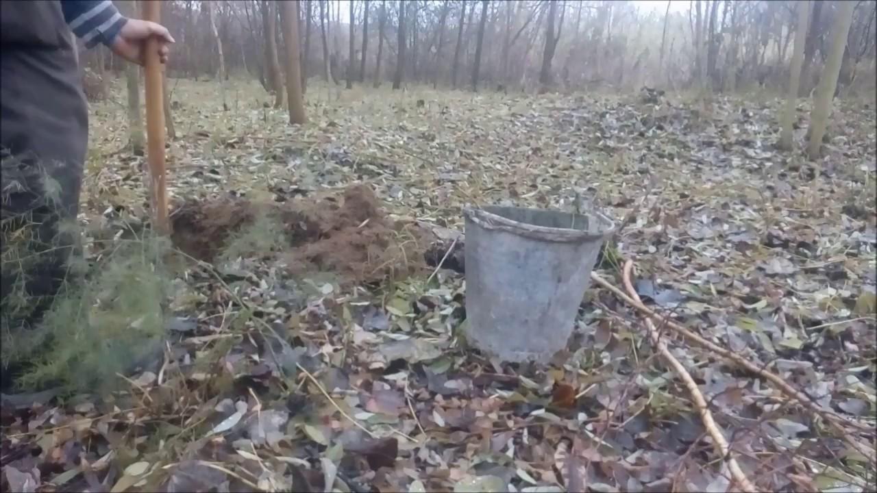 nyírfa levelek prosztatitis)