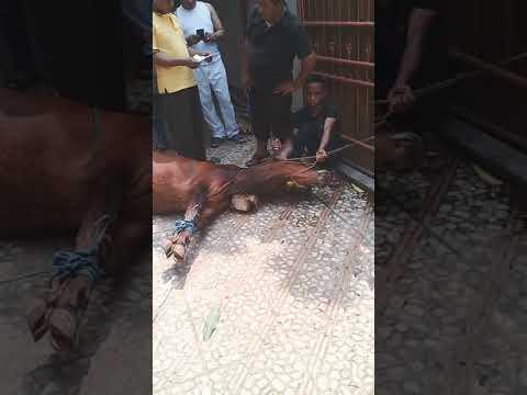 Acara penyembelihan hewan qurban