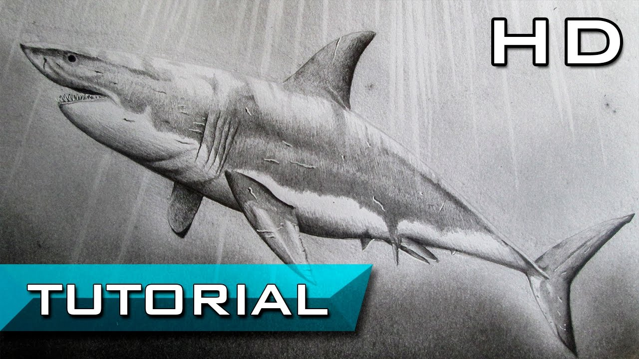 How to Draw a Great White Shark Step by Step with Pencil ...