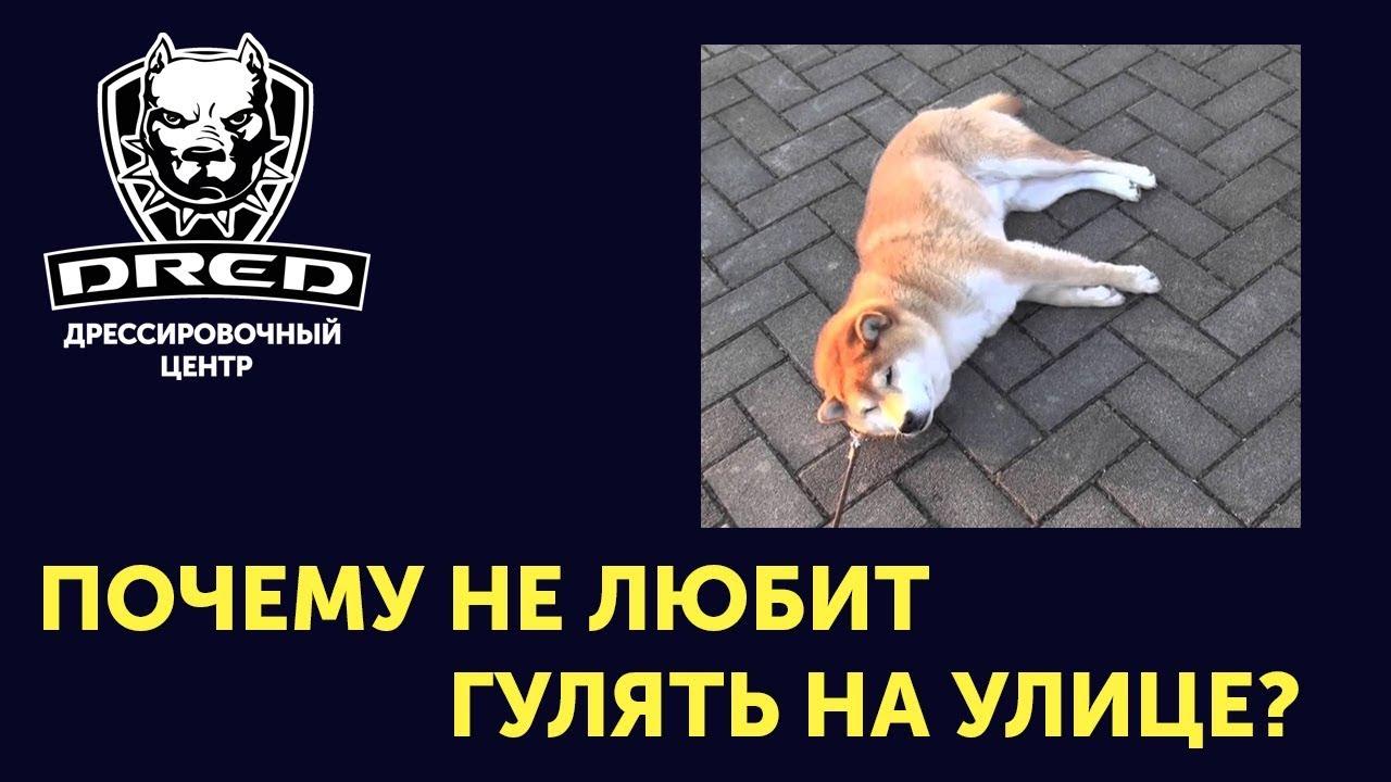 Как приучить собаку гулять на улице? Почему может не хотеть? Как заинтерисовать?