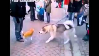 Надувной кот против собаки