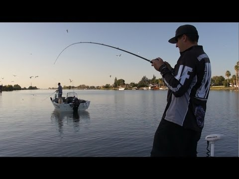 Vertical fishing for Delta Stripers - IF