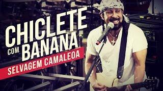 Chiclete com Banana   Selvagem camaleoa   YouTube Carnaval 2014