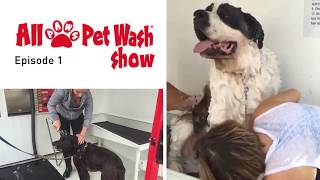 All Paws Pet Wash Show - Episode 1