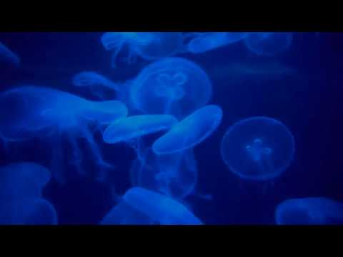 North Carolina Aquarium - Fort Fisher (2017)