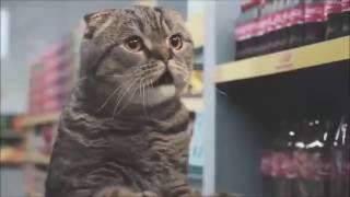 10 hours of Cats in a Netto Market // HD