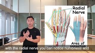 Radial nerve slider