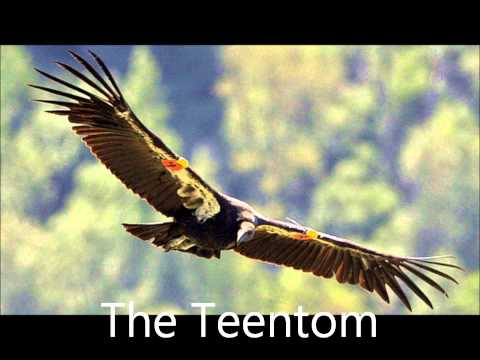 Bernd Spier ----Der Condor zieht.....