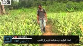 مصر العربية | المنتجات البيولوجية.. توجّه مثمر لشباب المزارعين في الكاميرون