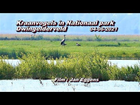 Kraanvogels in Nationaalpark