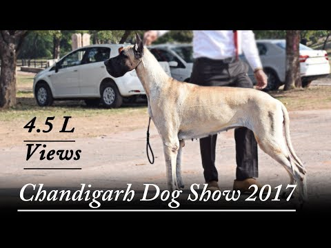 Chandigarh Dog Show 2017