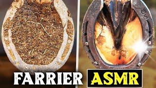 Farrier AsmrHoof RestorationOddly Satisfying