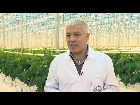 «Агрономика». Тепличный бизнес (9.12.2015)