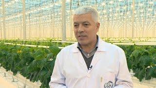 «Агрономика». Тепличный бизнес (9.12.2015)(В Белгородской области в 2014 году в теплицах произведено 16 тыс. тонн овощей – по 10,3 кг на каждого жителя реги..., 2015-12-10T08:40:58.000Z)