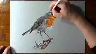 How to drawing bird 3D