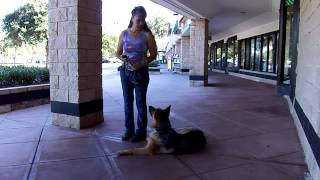 E Collar Training Gsd Luna Dog Aggression Issues Dogtra