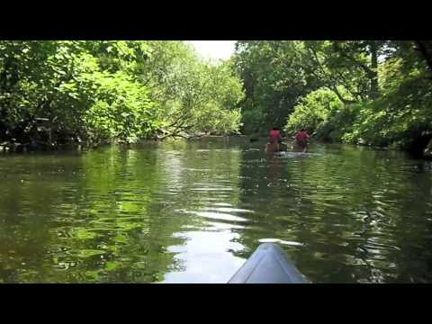 Canoeing On the Bronx River!