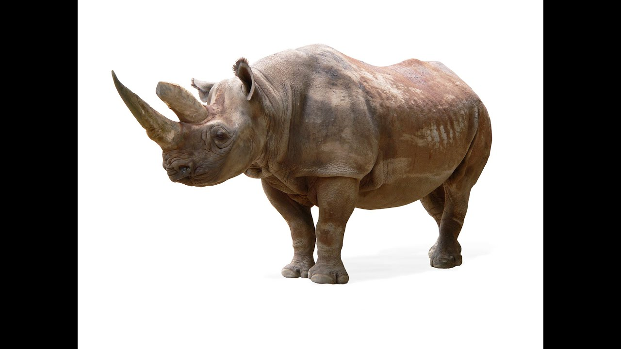 15 Things You Might Not Know About Rhinos