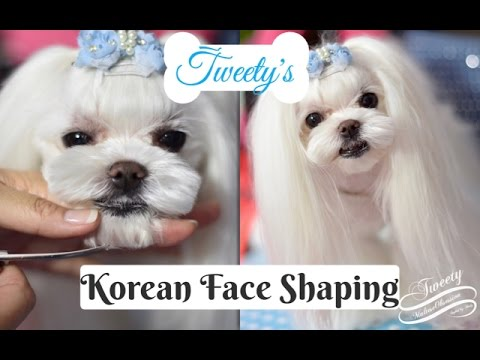 KOREAN GROOMING: Tweety's Korean Face Korean Cut~How to Trim Maltese Face 말티즈미용 Music by Emma Lee