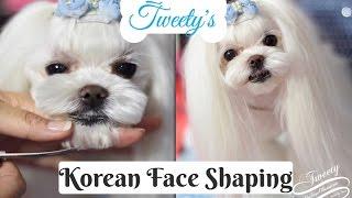 KOREAN GROOMING: Tweety's Korean Face Korean Cut~How to Trim Maltese Face 말티즈미용 Music by Emma Lee트위티