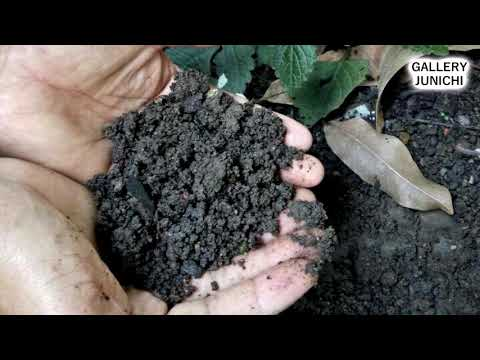 Apa Itu PH Tanah ?? Dan Apa Manfaatnya Bagi Tanaman ???