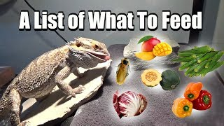 What To Feed Your Bearded Dragon