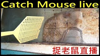 直播DIY抓老鼠實況 Catch Mouse live
