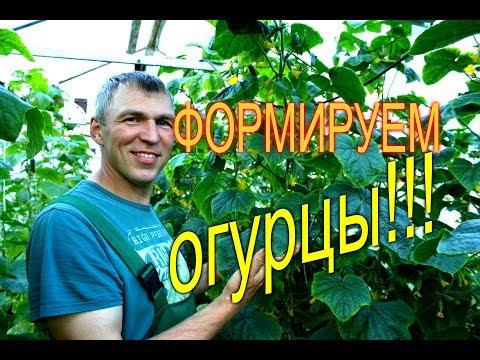 ФОРМИРОВАНИЕ ОГУРЦА В ТЕПЛИЦЕ///МОЯ ЛЮБИМАЯ УСАДЬБА