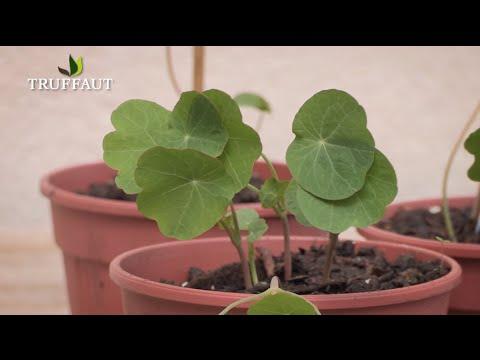 Comment semer des plantes annuelles et fleurs d'été ? - Jardinerie Truffaut TV