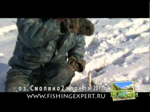 отчет о рыбалке на озере сиге