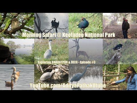 Morning Safari at Keoladeo National Park - Exploring Bharatpur & Deeg: Episode 3