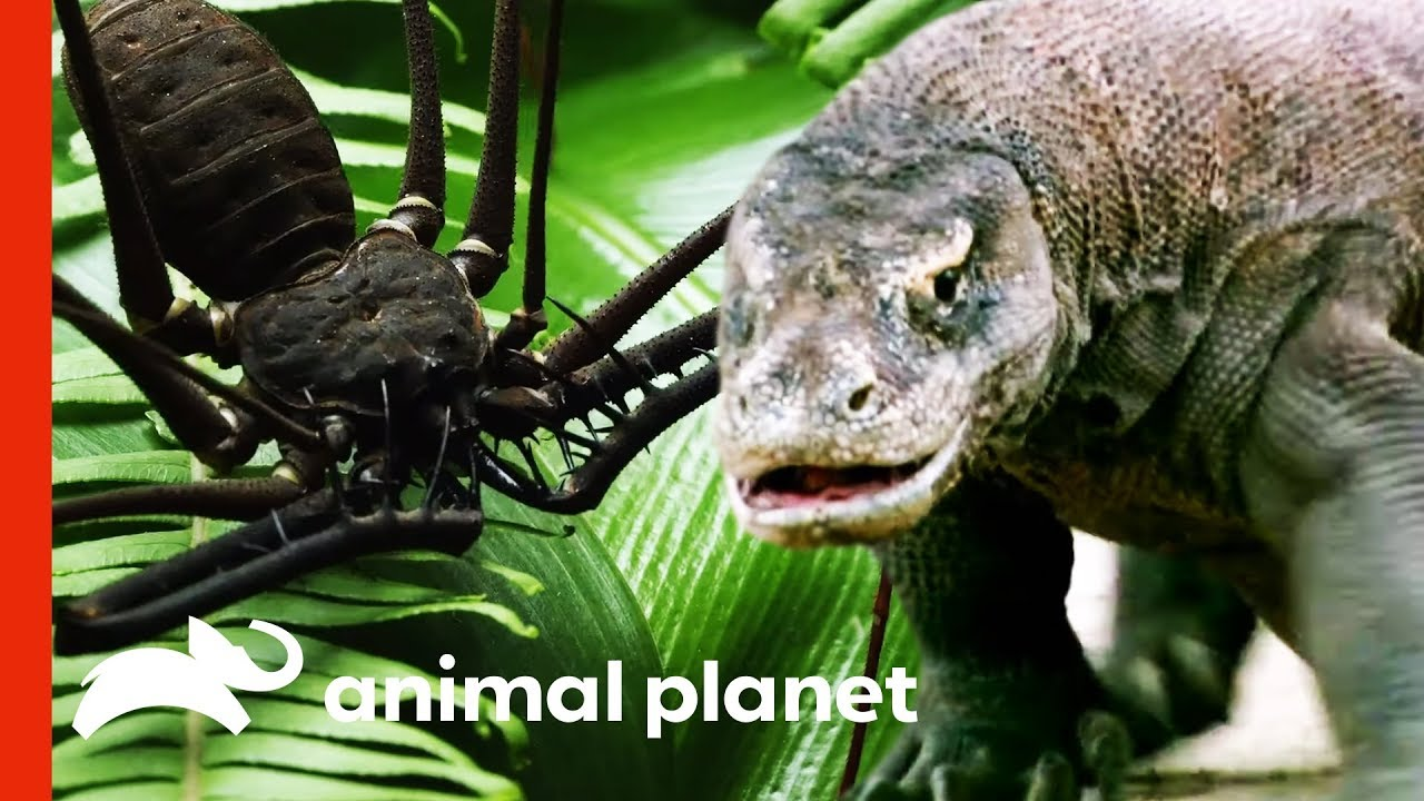 Extreme Wildlife and Fascinating Nature on Animal Planet (Compilation)