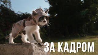 [За Кадром] Котята Ассасины