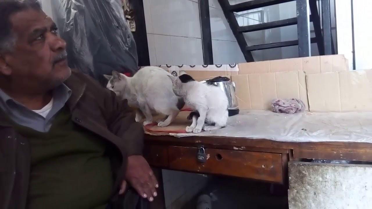 القط بندق جاب مشمشة مبقاش لوحدة مع مصطفى