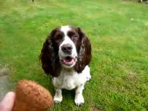 Harpur's got Talent (singing dog)