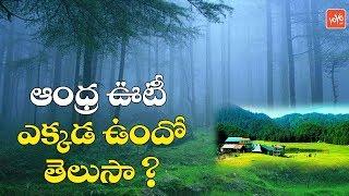 ఆంధ్ర ఊటీ ఎక్కడ ఉందో తెలుసా? | Ooty of Andhra Pradesh | Horsley Hills | AP Tourism