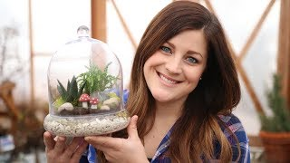 Succulent Terrarium | Trying Out Hydro Stones 🌿🌵� // Garden Answer